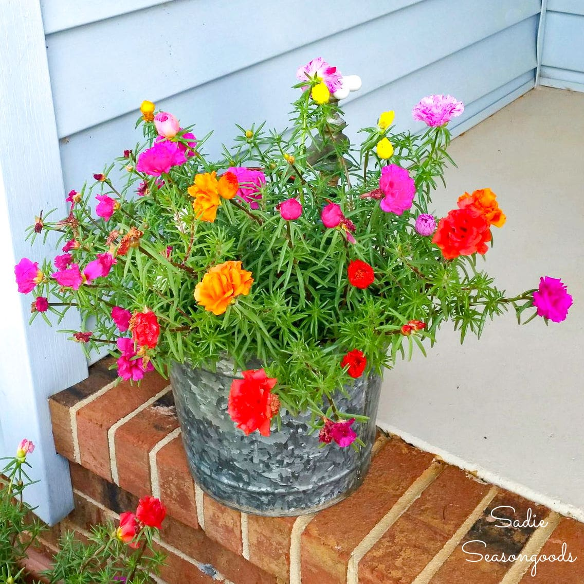 Galvanized Bucket Planter with a Decorative Hose Bibb