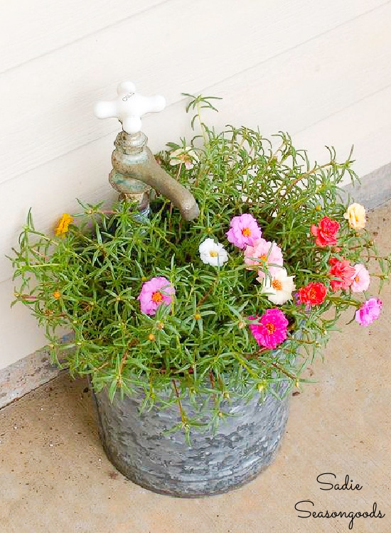 Galvanized bucket planter
