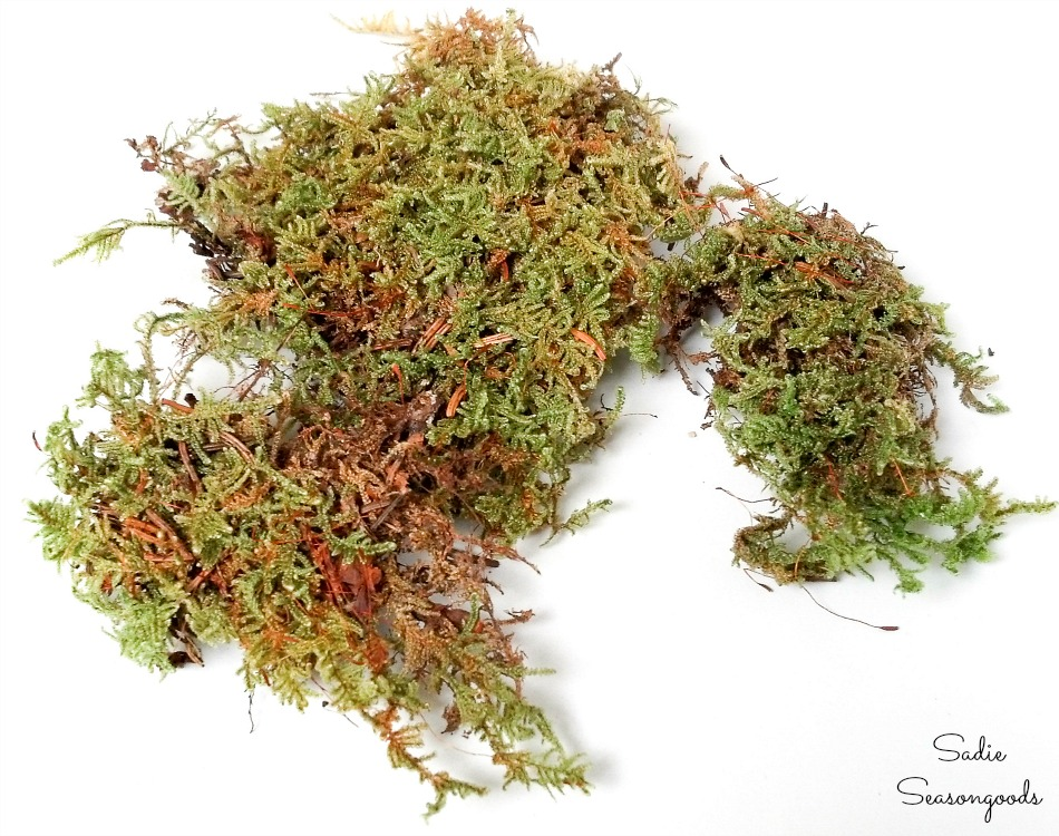 Reindeer moss to look like seaweed in the beach themed decor