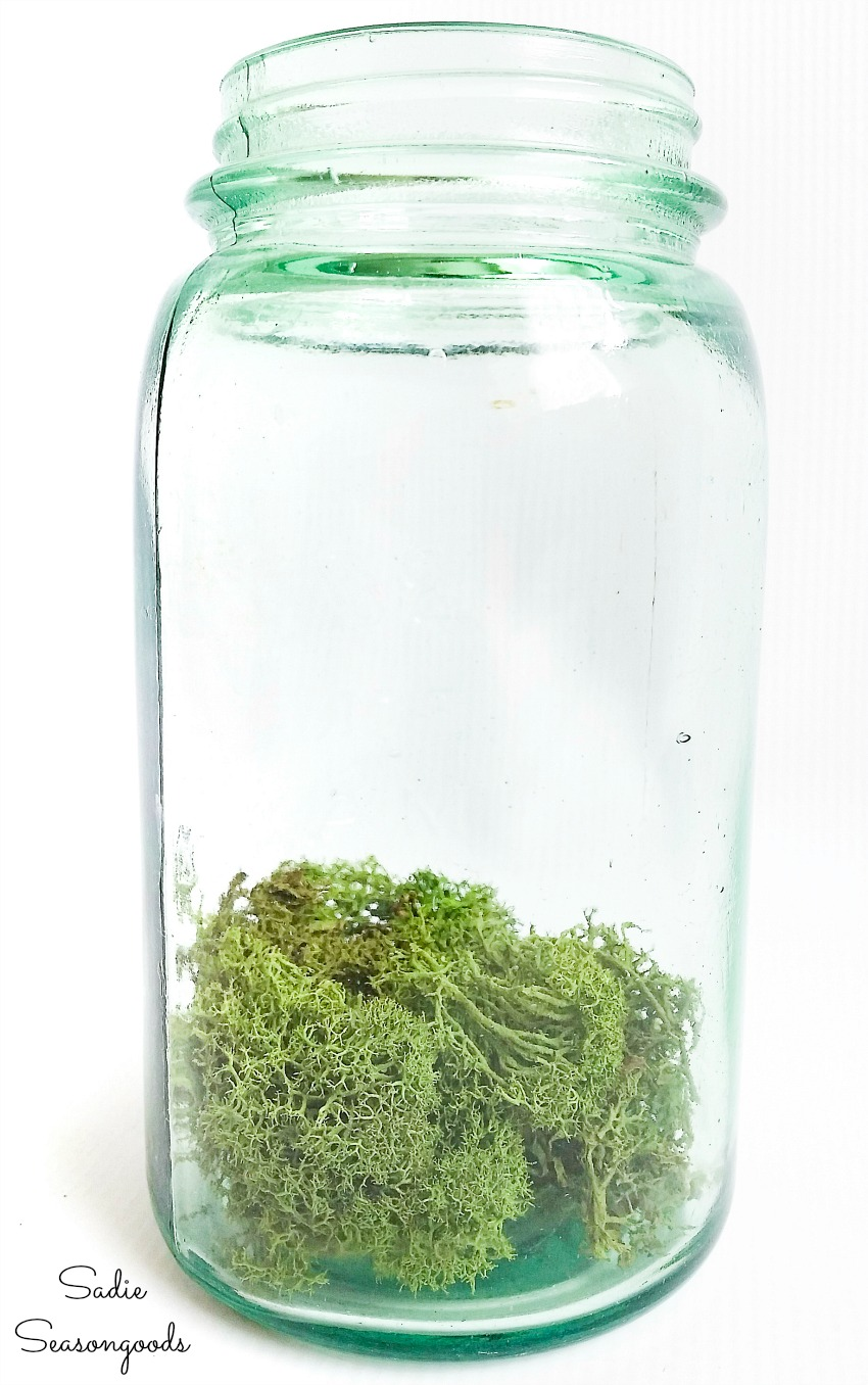 Reindeer moss as the Irish countryside in a vintage mason jar