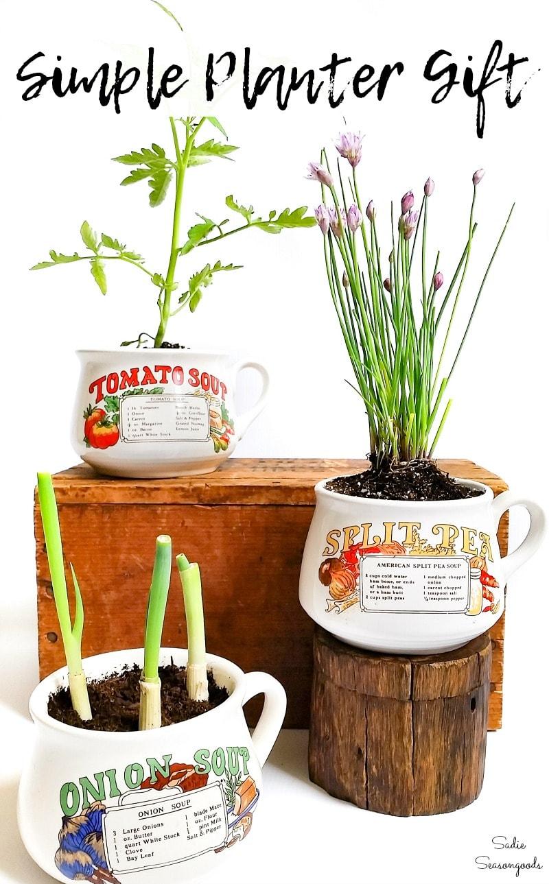 Kitchen herb planter in a soup mug