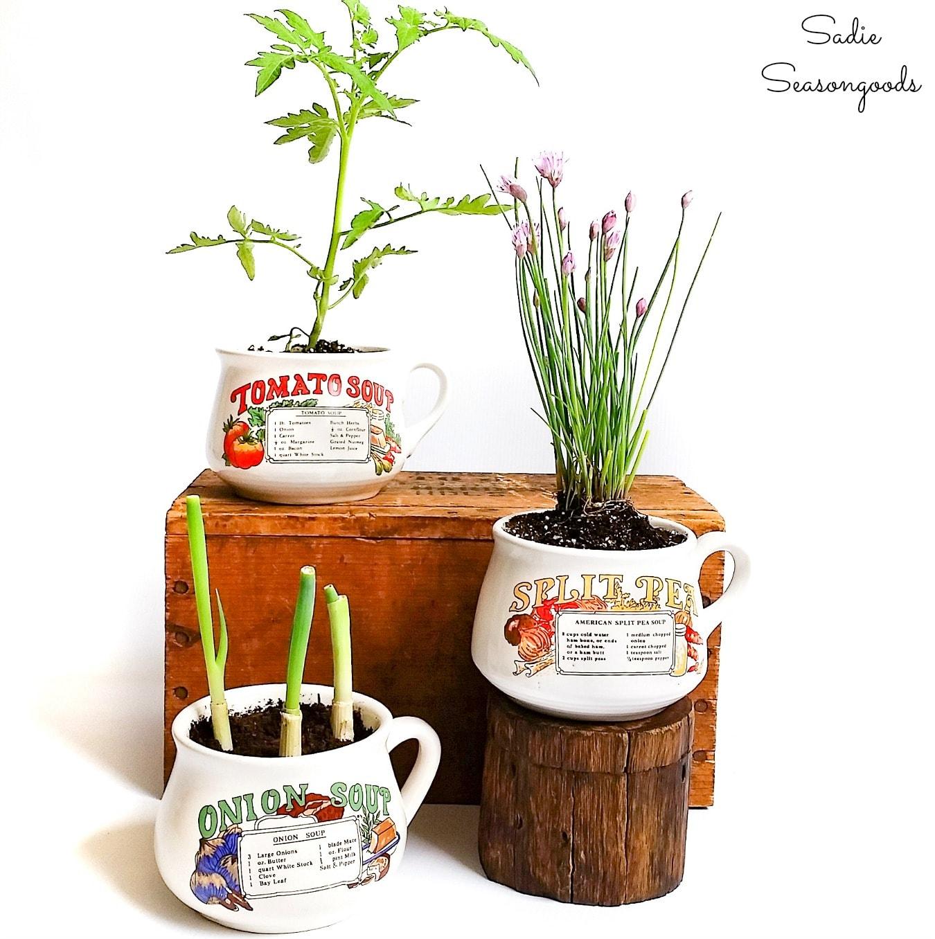 Unique Plant Gifts in Vintage Soup Mugs