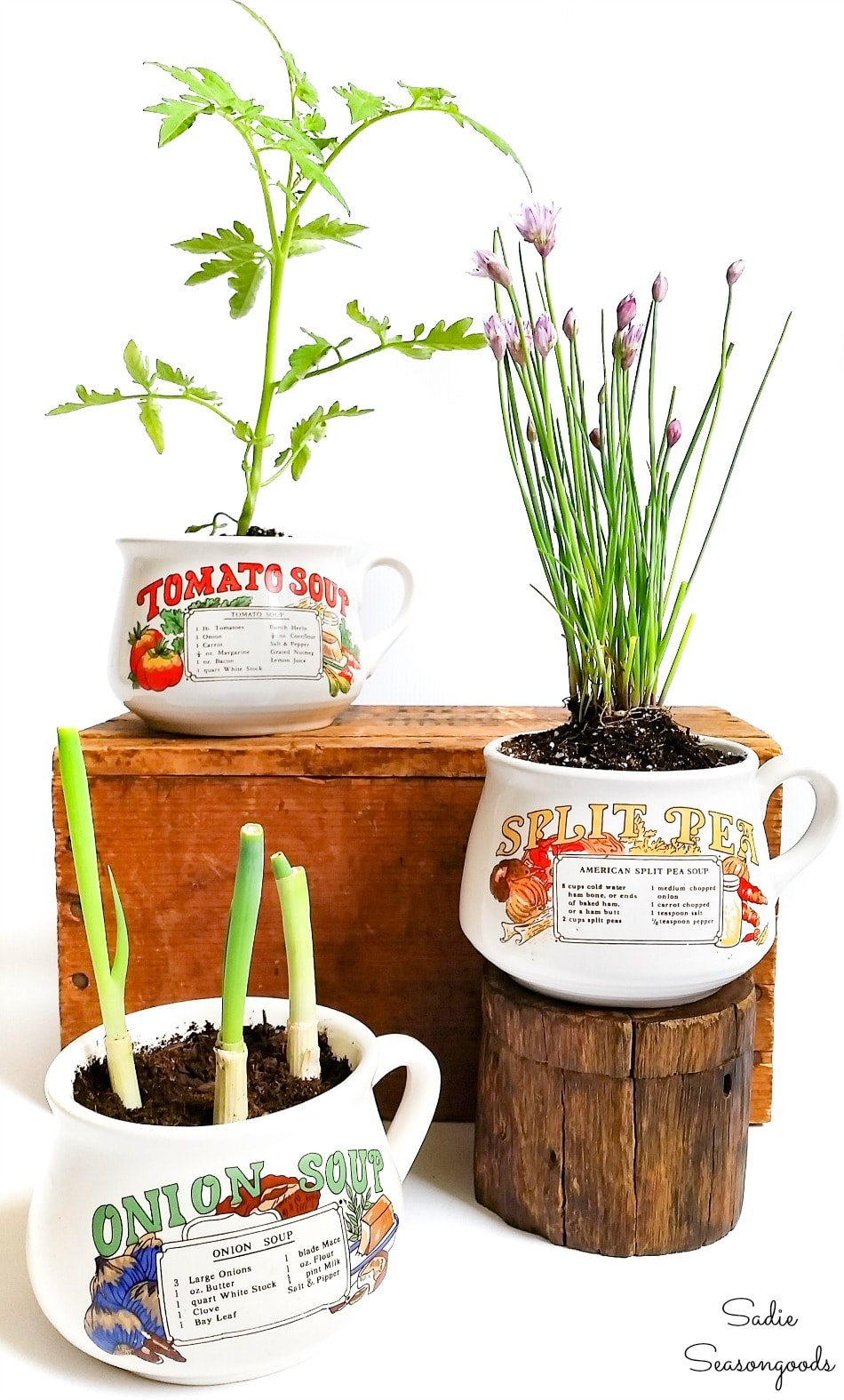 Vintage soup mugs as planters for kitchen herbs