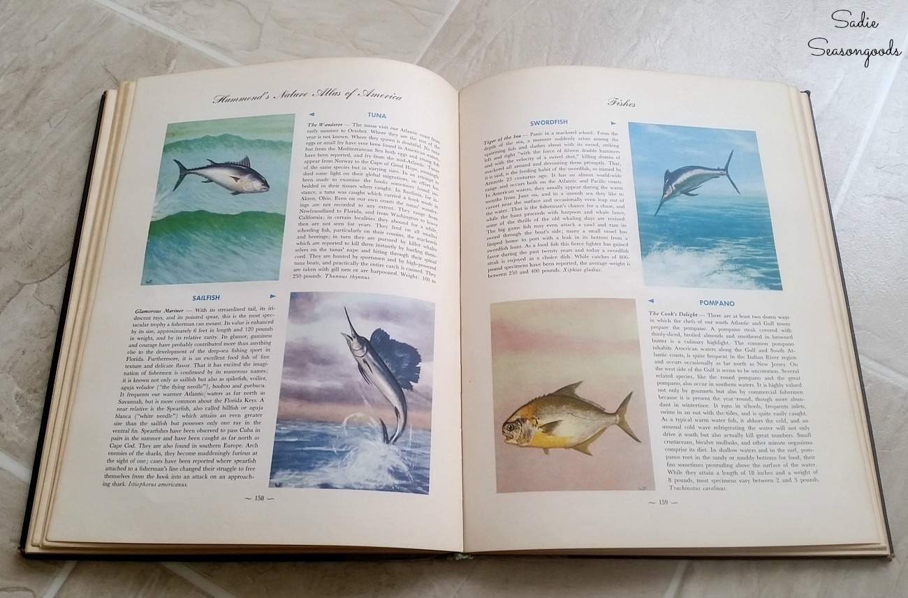 Thrift Store Book or nature atlas to be upcycled into coastal wall art with collage photo frame by Sadie Seasongoods