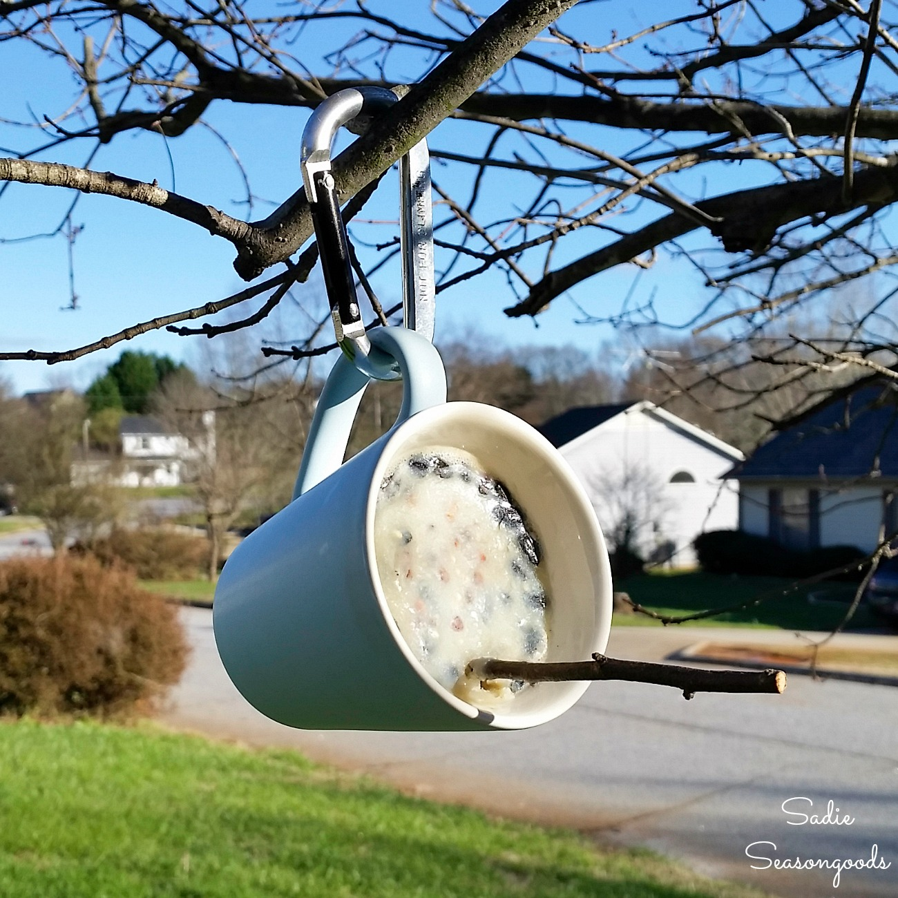 Suet Feeder or DIY Bird Feeder in a Coffee Mug