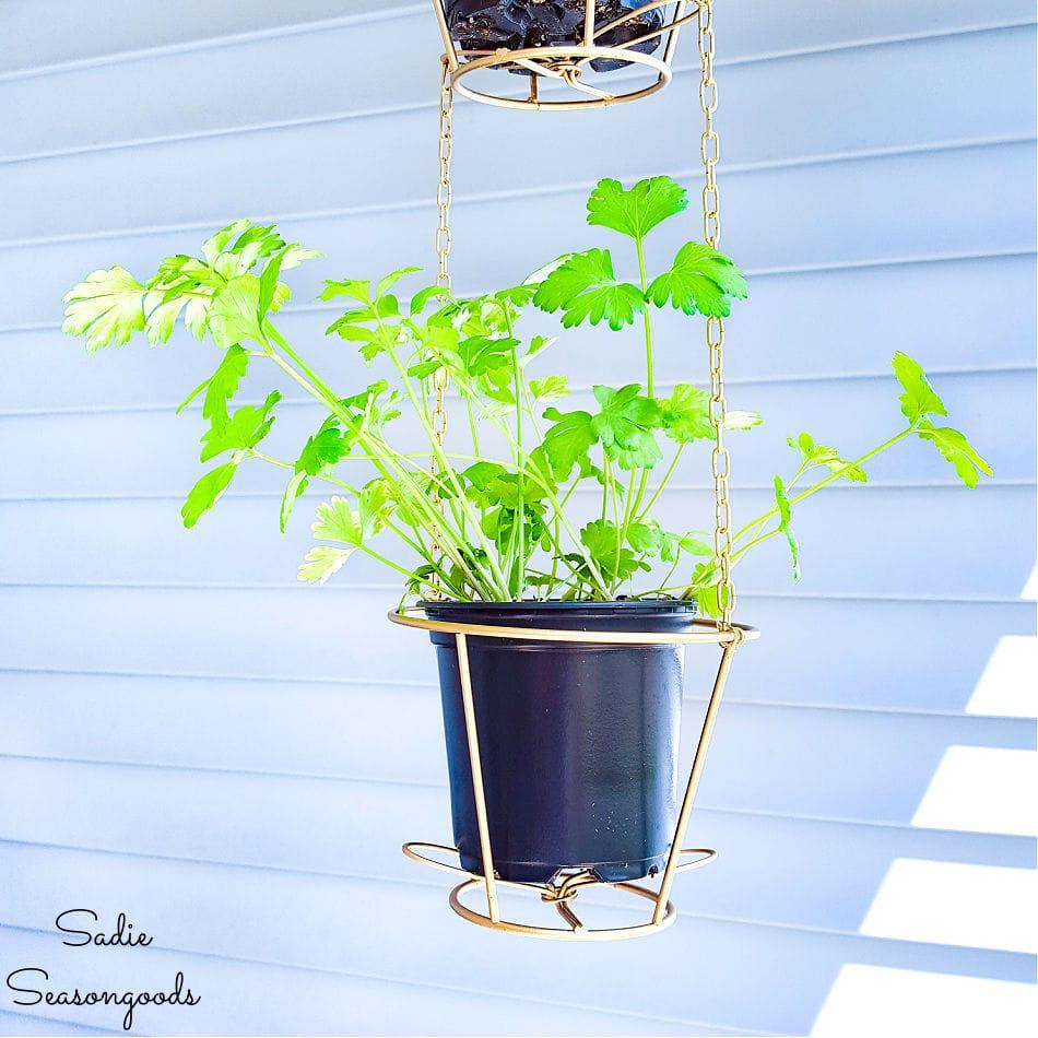 herb hanging basket