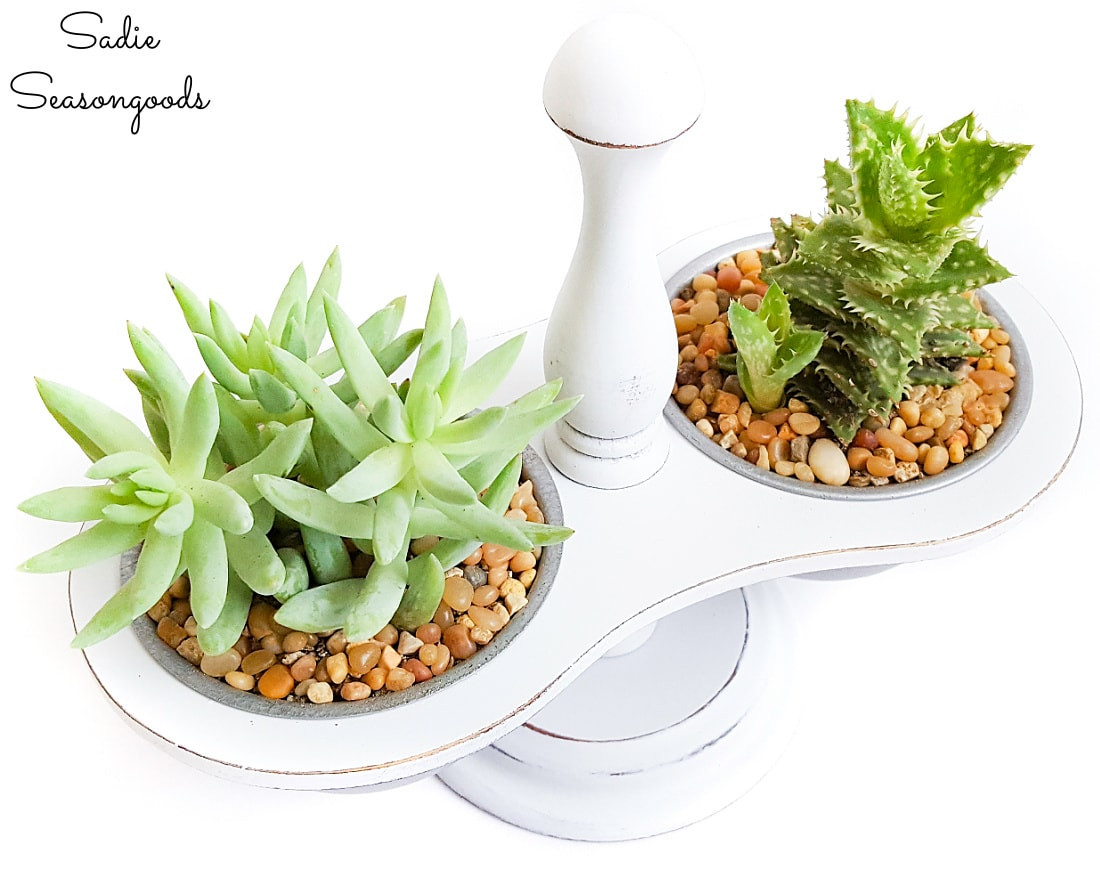 Mini succulents in a vintage condiment caddy