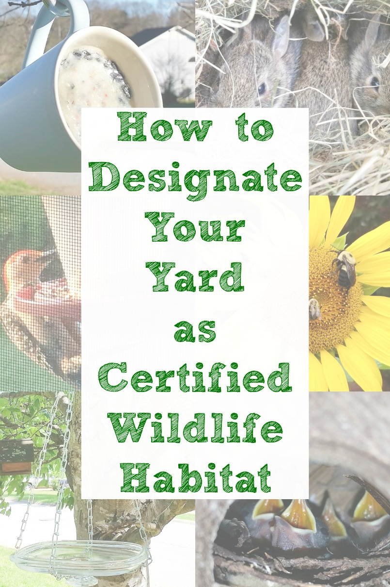Bird habitat and certified backyard habitat with upcycling projects