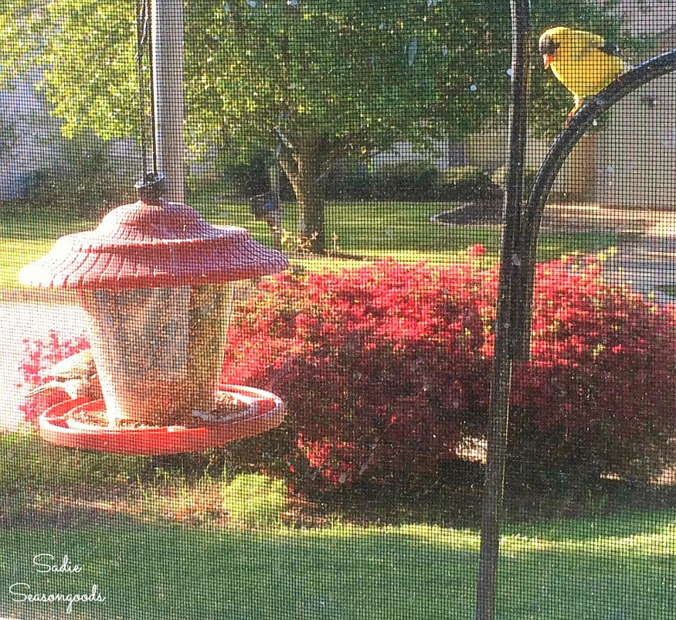 Bird habitat in the front yard with a Goldfinch and bird feeder
