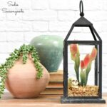 Halloween Terrariums in Decorative Lanterns