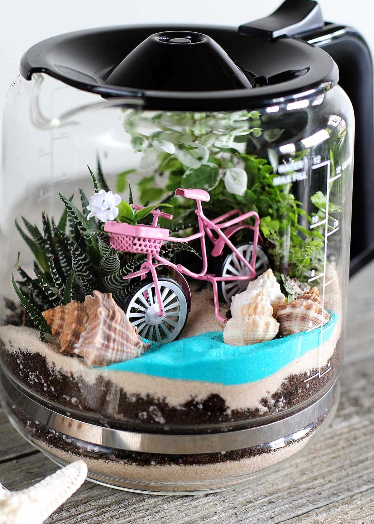 DIY terrarium in a glass coffee pot