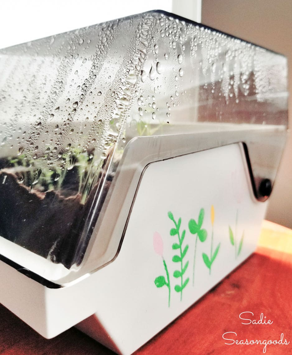 condensation in a tabletop greenhouse