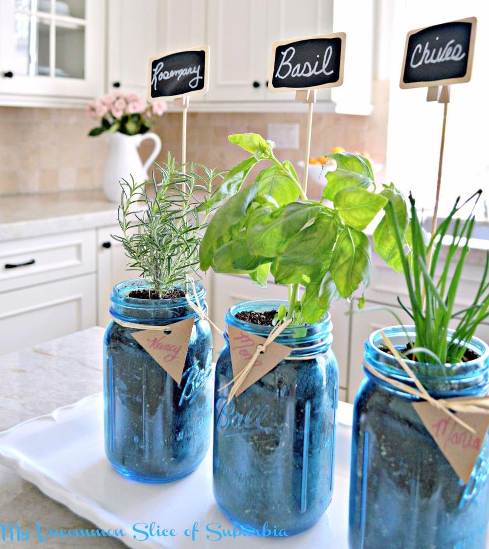 Kitchen herb plants in mason jars